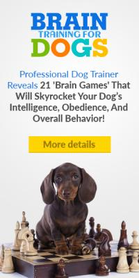 Brain Training Your Dogs