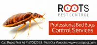 Professional Bed Bug Control Services | Roots Pest Control