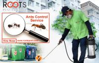 Ants Control Services in Toronto | Roots Pest Control