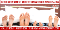 Bed Bug Treatment and Extermination in Mississauga