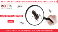 Ants Control Service in Toronto