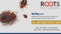 Professional bed bug exterminators | Roots Pest Control