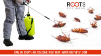Cockroaches Control Services in Toronto | Roots Pest Control