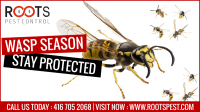 Wasp Control Services in Toronto | Roots Pest Control