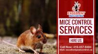 Mice and Rat Control | Excellent Pest Control