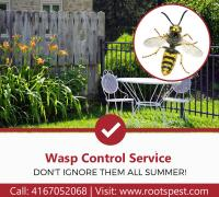 Wasp Control and Removal Service | Roots Pest Control