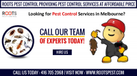 Looking For Pest Control in Brampton | Roots Pest Control