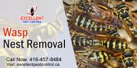 Wasp and Bee Control | Excellent Pest Control