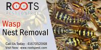 Wasp and Bee Control | Roots Pest Control