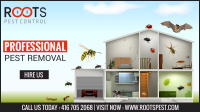 Pest Removal Brampton | Roots Pest Control