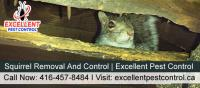 Squirrel Removal and Control | Excellent Pest Control