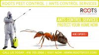 Roots Pest Control | Ants Control Services
