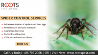Spider Control Service | Roots Pest Control