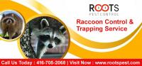 Raccoon Control & Trapping Service | Roots Pest Control