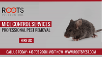 Mice Control Services in Vaughan | Roots Pest Control