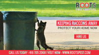 Raccoon Control Services in Clarigton | Roots Pest Control