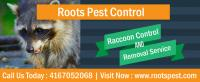 Raccoon Control Services in Toronto | Roots Pest Control
