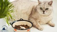 Pet Nutrition Kingston - Tips for helping your pet on their weight loss journey